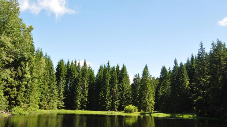 Seminar Wald und Gesundheit